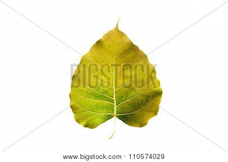 abstract colorful yellow leaf, isolated on white background