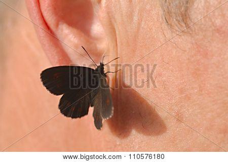 Butterfly landed on human skin