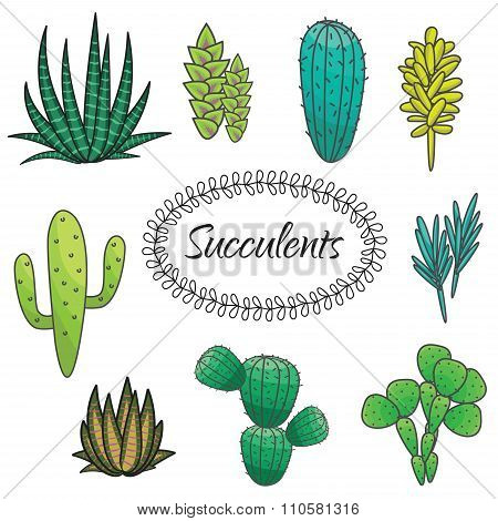 Succulents plant vector set. Botanical green cactus flora collection.