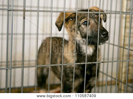 Sad Puppy In  Shelter For Homeless Animals