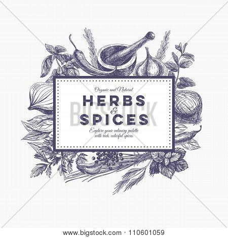 Vector background with hand drawn herbs and spices.