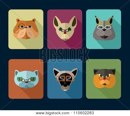 Cats avatar icon set