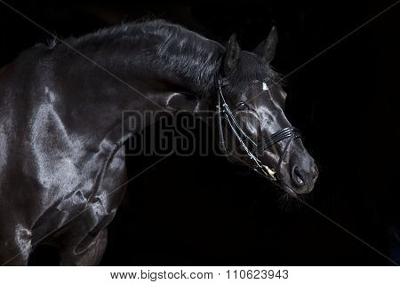 black horse on black background