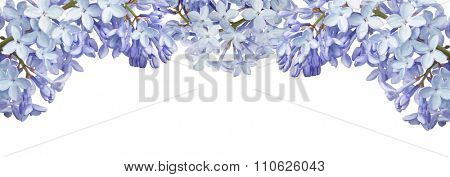 light blue lilac flower isolated on white background