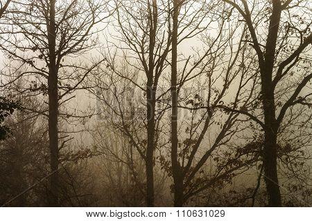 Winter Tree Silhouette In Great Fog
