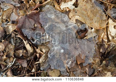 Leaf Frozen In Ice
