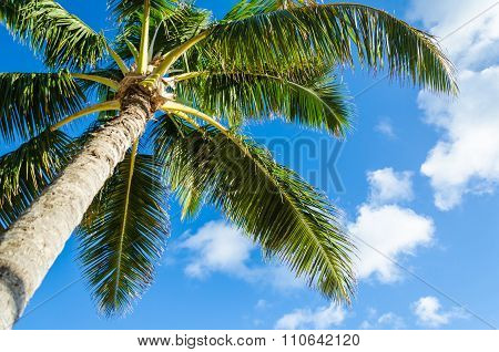 Coconut palms tree background with blue sky