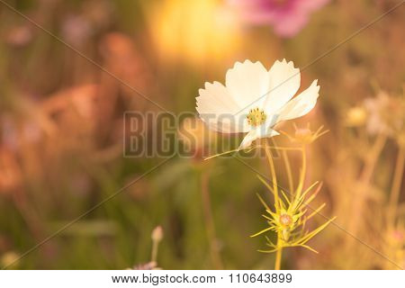 Wildflowers On A Meadow In A Sunny Day