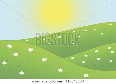 Summer camomiles field