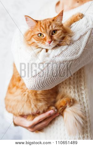 Woman In Knitted Sweater Holding Ginger Cat. Pet Hiding In The Arms Of It's Mistress.