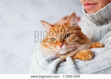 Man In Knitted Sweater Holding Ginger Cat.