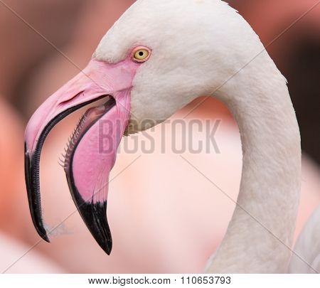 Portrait of a pink flamingo.