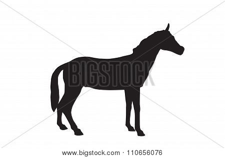 Horse Isolated on White Background. Vector Illustration. EPS10.