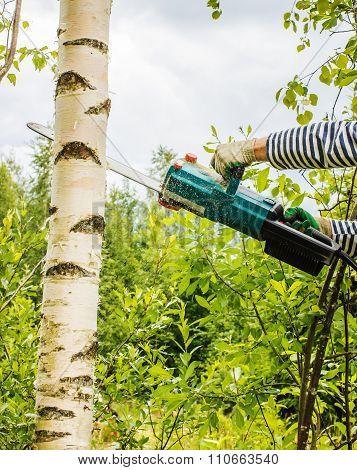 Man Cut Away Fresh Birch Against The Sky