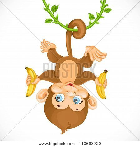 Cute Baby Monkey With Banana Hanging On The Liana Isolated On A