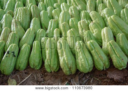 Green Chayote