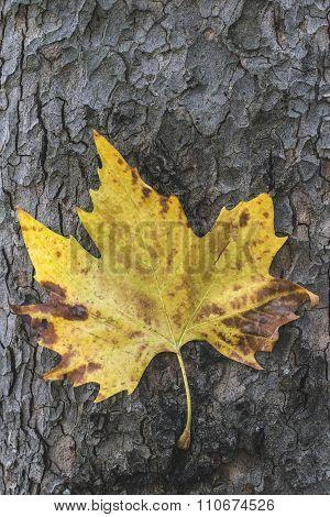 Autumn Leaf On Sidewalk.