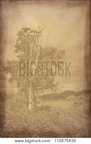 /Background texture with faded landscape photograph