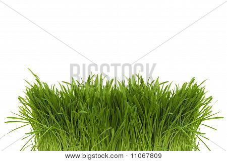 Bunch Of Green Spring Grass