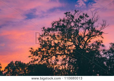 Tree Crowns On Sunset Background