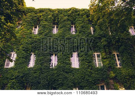 Building Facade Is Overgrown By Greenery