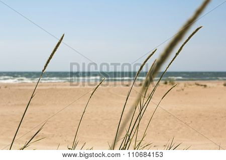 Seaside and the spikelets