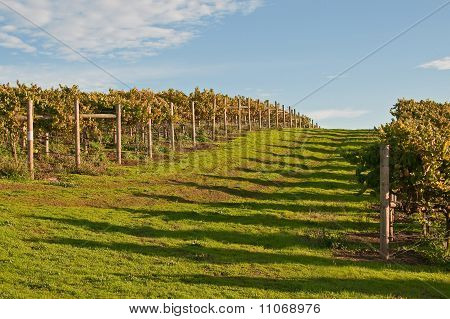 Road Through Autumn Vineyard