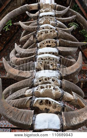 Buffalo Horns At Traditional Houses In Tana Toraja, Sulawesi, Indonesia