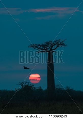 Sunrise Over Avenue Of The Baobabs, Madagascar