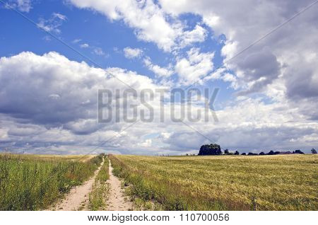 Rural Landscape With Bushes And Clouds