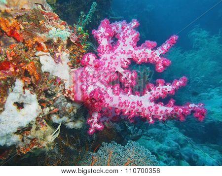 Soft coral, Island Bali, Pemuteran