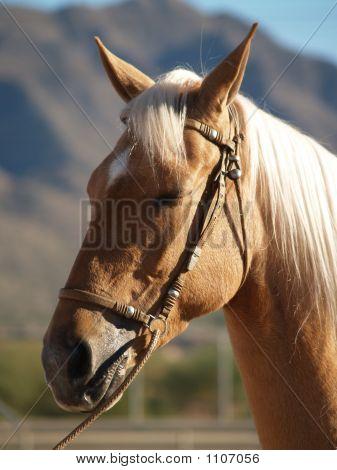 Horse Show 8