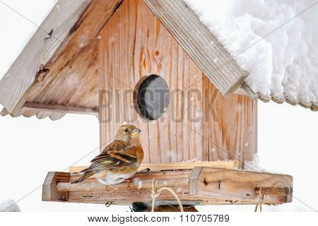 The Brambling (Fringilla montifringilla) perching on a wooden bird feeder house during the snow falling in Europe