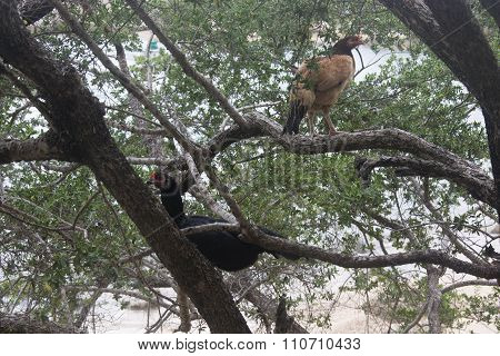 Hens on a Tree