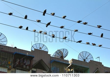 The satellite dish and electric line on the street