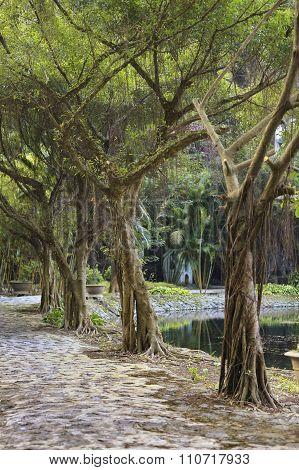 asian tropical garden, Ninh Binh, Vietnam