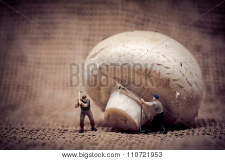 Miniature Workers Cutting Down Gian Mushroom. Food Concept. Color Tone Tuned