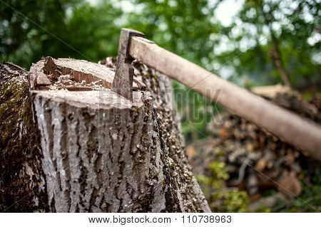 Lumberjack Hatchet On Pile Of Wood And Timber In Forest. Cleaning in the garden