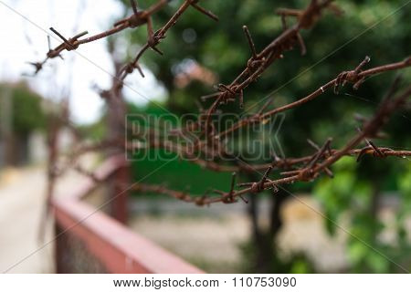barbed wires against green plants