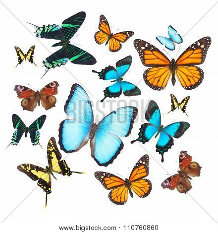 Tropical butterflies set