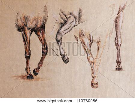 Horse Legs Study