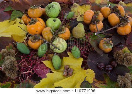 Autumn vegetables and fruits and autumn leaves