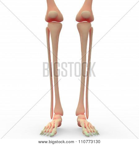 Legs with Knee Joints