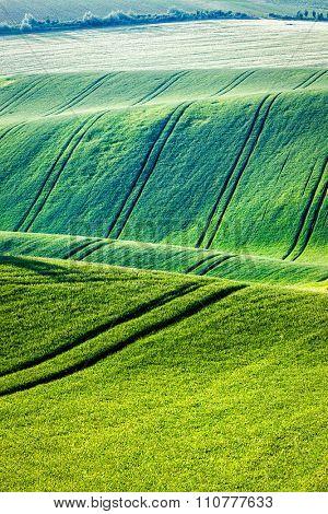 Rolling landscape of green fields in South Moravia, Czech Republic