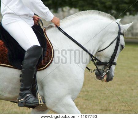 Horserider