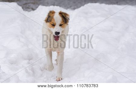 Mixed breed dog enjoys the winter season