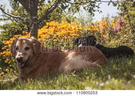 dogs relaxing in the shade