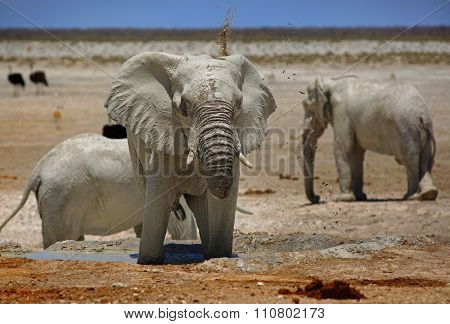Herd of elephants next to a waterhole in Etosha