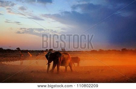Elephants bathing themselves at dusk