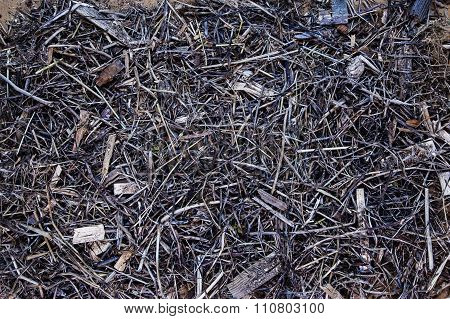 Intricate Sticks, Twigs And Wood Background Texture.